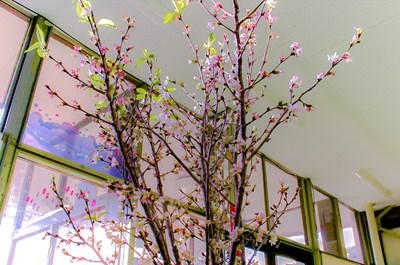 s-葉桜4